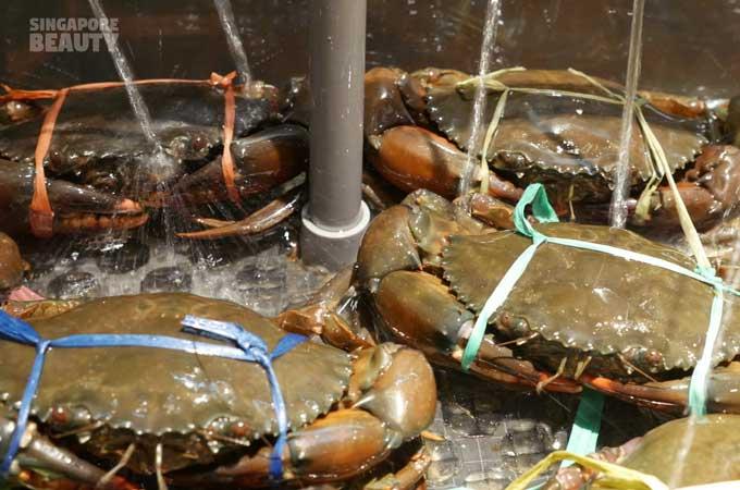 new-thai-tanic-live-crab