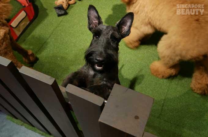 ofur-dog-cafe-black-dogh-standing