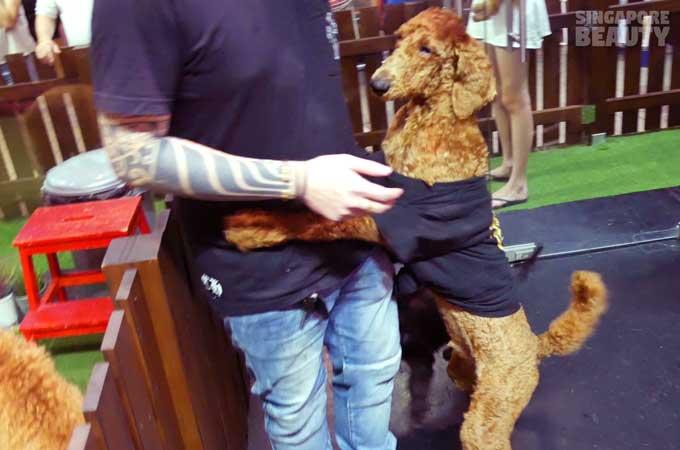 ofur-dog-cafe-dog-cuddle