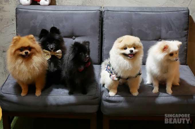 ofur-dog-cafe-dog-group-photo