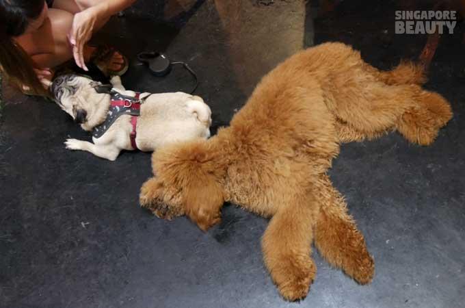 ofur-dog-cafe-dog-interacting