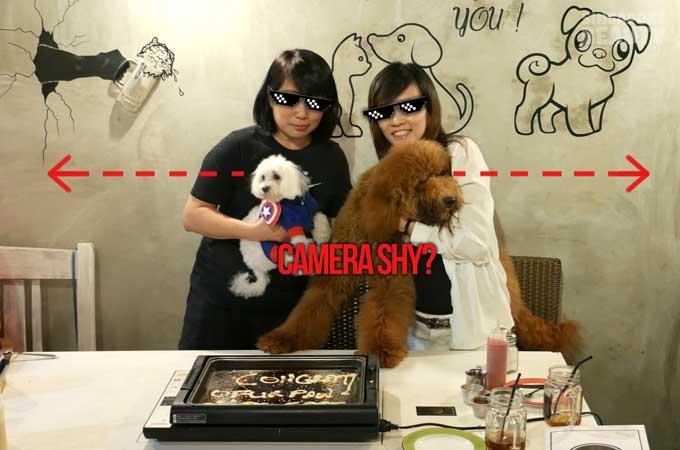 ofur-dog-cafe-dog-shy-away