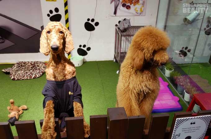 ofur-dog-cafe-dogs