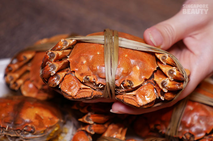 new-thai-tanic-hairy-crab