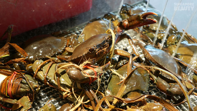 new-thai-tanic-live-battle-crabs