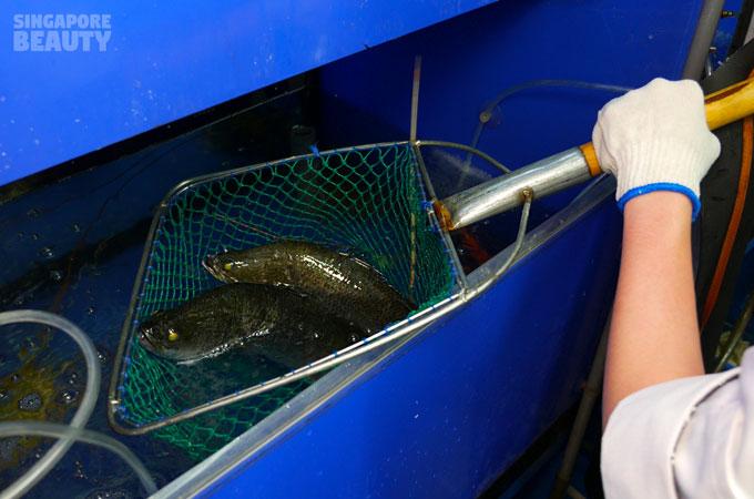 orchid-roast-fish-catch-fish