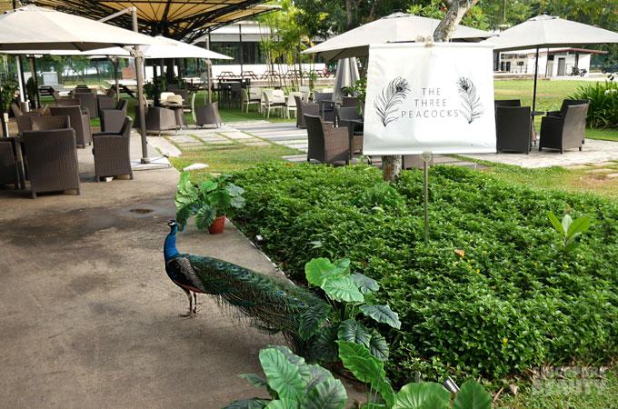 the-three-peacocks-at-labrador-park-peaocock-at-sign