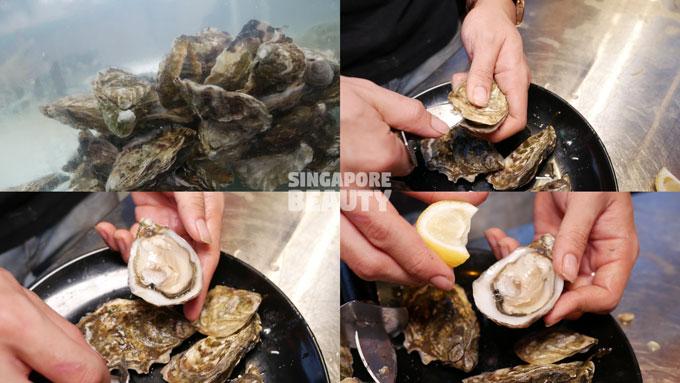 live-station-oyster
