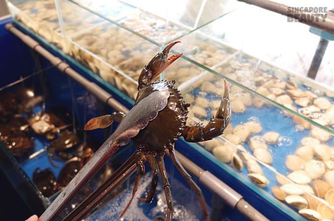 Catch Live Crab
