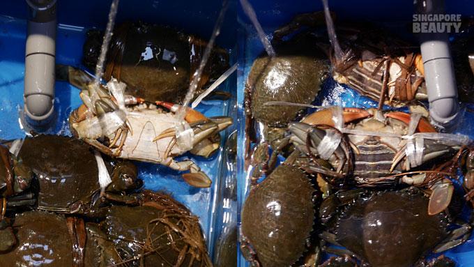 Male Female Crab