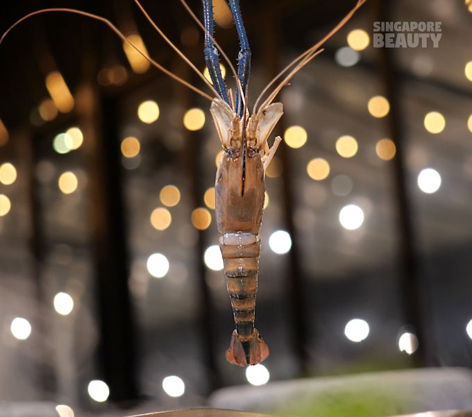 giant-prawn