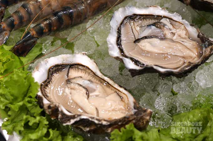 live oysters