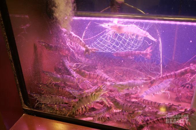 live prawns