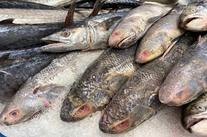 Indian threadfin
