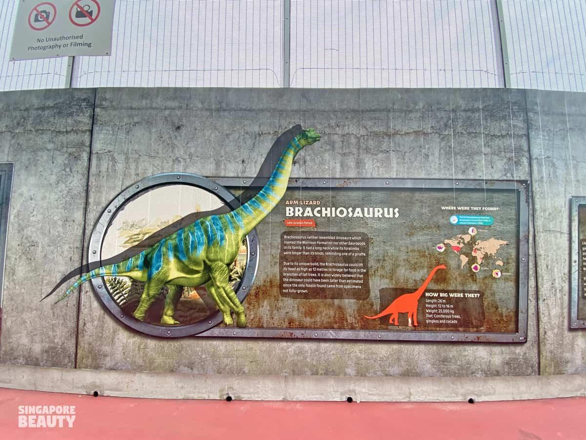 brachiosaurus herbivorous dinosaur